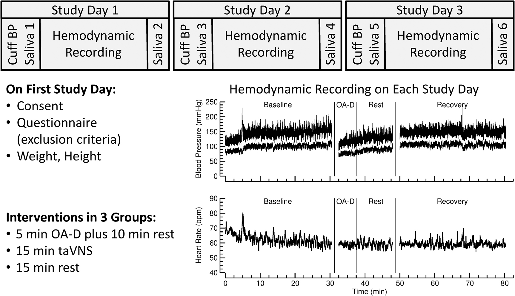 Figure1: Experimental protocol. The study consisted of three study days. At the beginning of the first study day, written consent was obtained, potential exclusion criteria were assessed through a questionnaire, and height, weight, and arm cuff blood pressure were measured. On each study, day saliva samples were collected at the beginning and end of the study day, for a total of six saliva samples from each participant. Hemodynamic recordings of arterial blood pressure (finger plethysmography) and heart rate (ECG) were obtained on each study day. The experimental protocol during the hemodynamic recordings on each study day consisted of a 30min baseline recording, a 15min intervention, and a 30min recovery recording. In three experimental groups, the interventions consisted of either 5min of occipitoatlantal decompression (OA-D) followed by 10min of rest (OA-D group), or 15min of transcutaneous auricular vagus nerve stimulation (taVNS group), or 15min of rest (control group). The shown example of the hemodynamic recording is from a participant in the OA-D group.