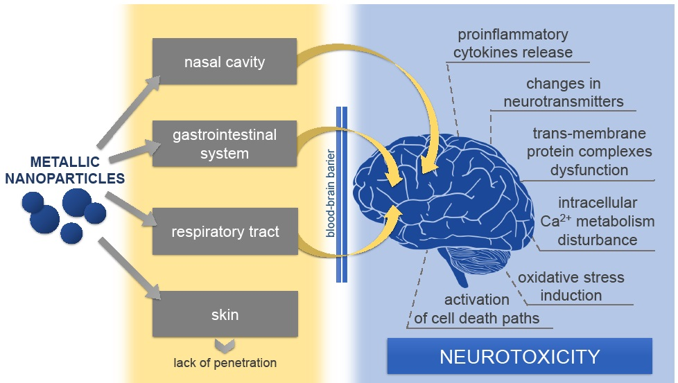 Toxicity of metallic nanoparticles in the central nervous system