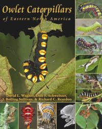 Test Cover Image of:  Owlet Caterpillars of Eastern North America